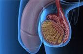 Заболевания мочеполовой системы у мужчин, их симптомы и методы лечения